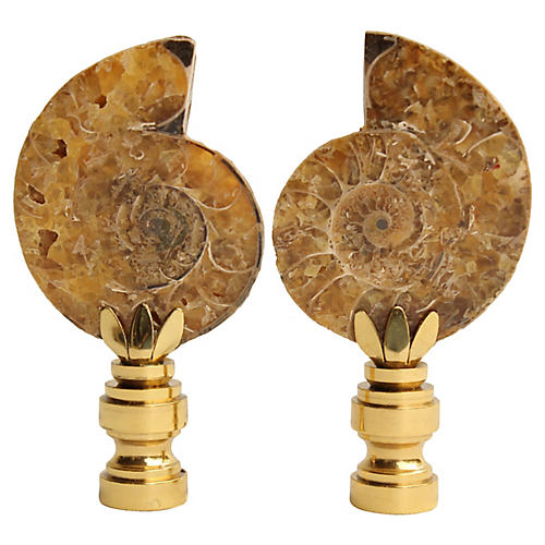 Ammonite Fossil Lamp Finals, Pair