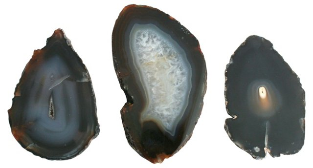 Black Agate Cross Sections, S/3