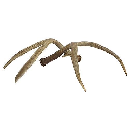 Deer Antlers, Pair