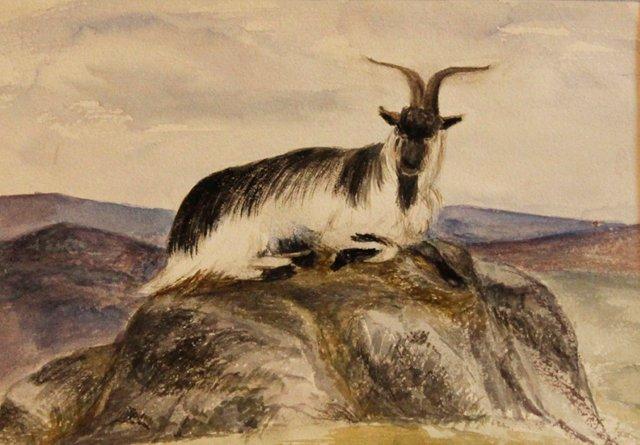 Mountain Goat, 1868
