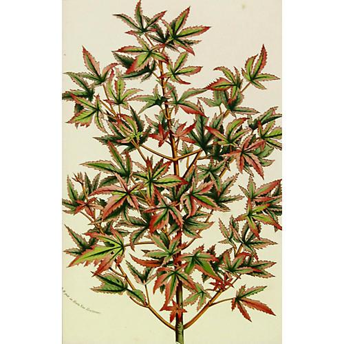 Leaf Branch, C. 1860