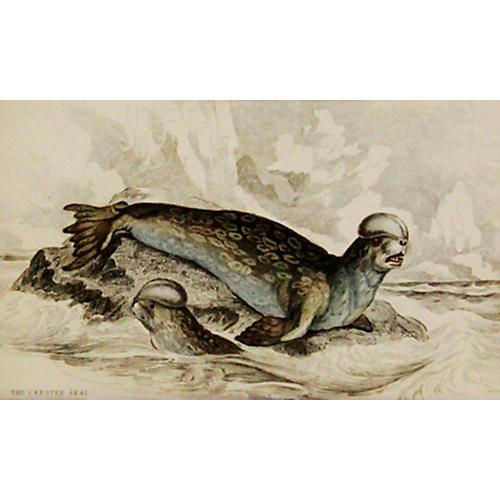 Seals, 1843
