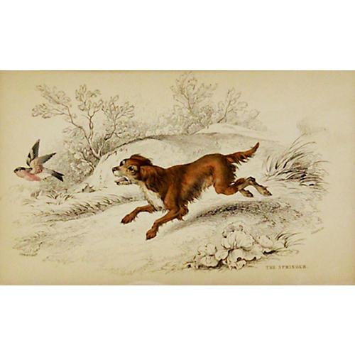 Springer, 1843