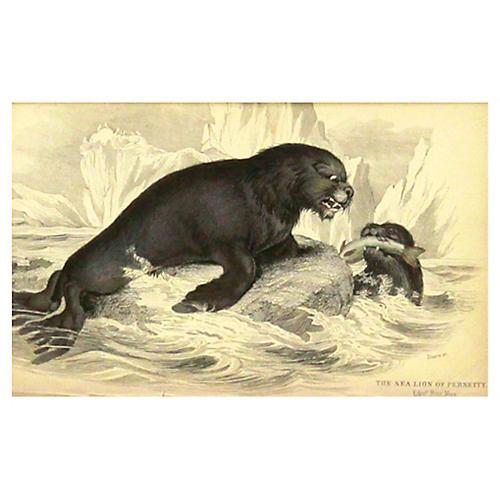Sea Lion w/ Mate, 1843