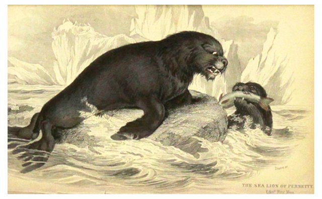 Sea Lion w/ Mate, 1843