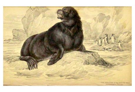 Sea Lion, 1843