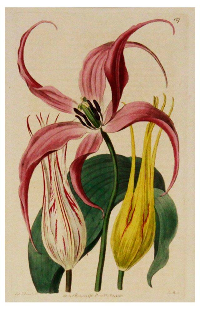 Tulips, 1816