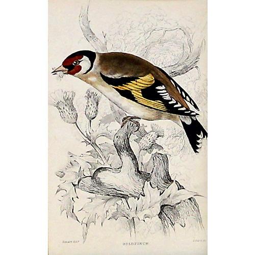 Goldfinch, C. 1840
