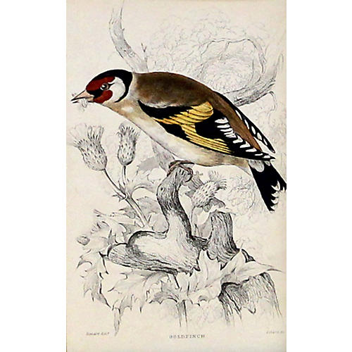 Goldfinch, C. 1840