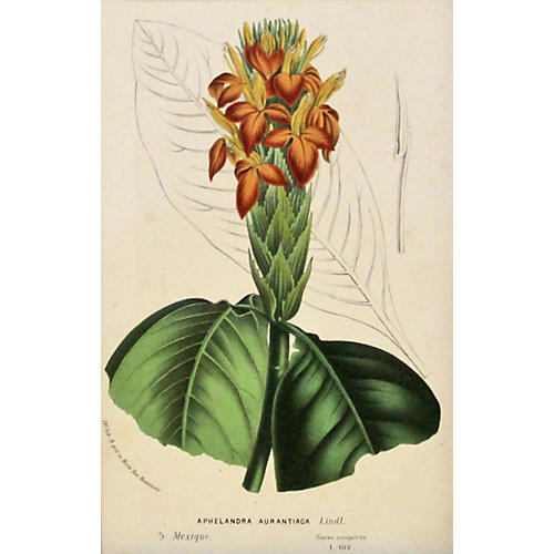 Fiery Spike Botanical, C. 1860