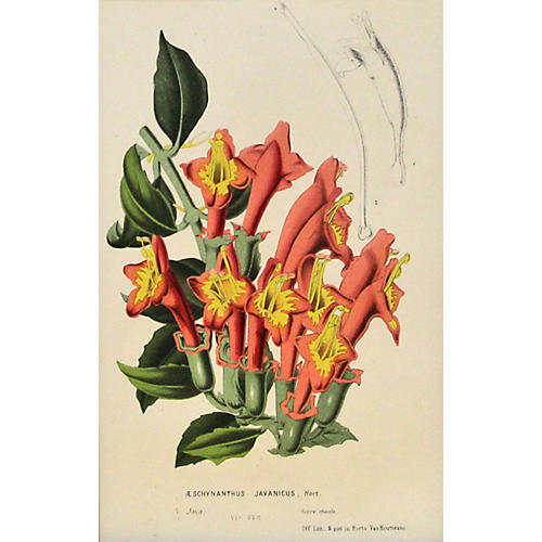 Orange & Yellow Lipstick Plant, C. 1860