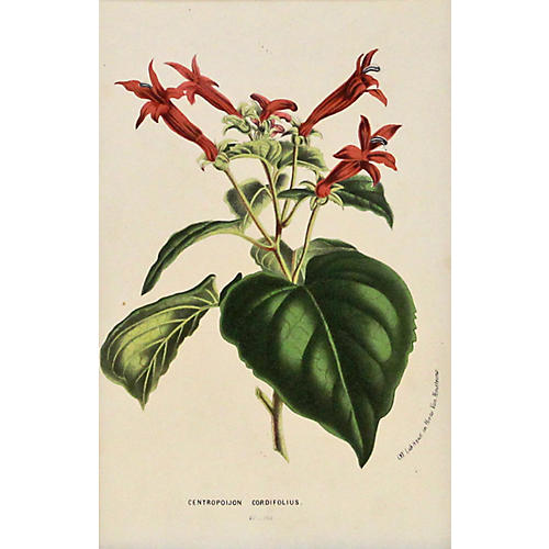 Red Botanical w/ Greenery, C. 1860