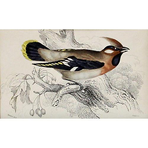 Waxwing Print, C. 1840