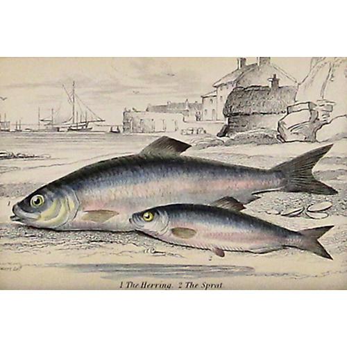 Herring & Sprout Fish, C. 1840