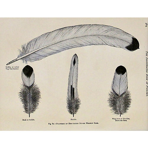 Silver Mooney Cock Feathers , 1880