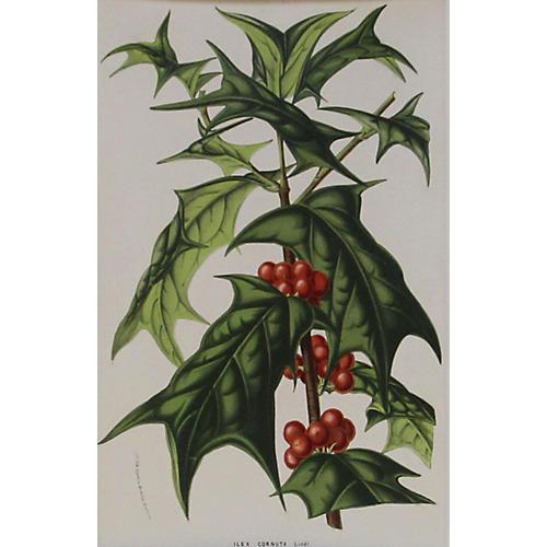 Holly, C. 1860