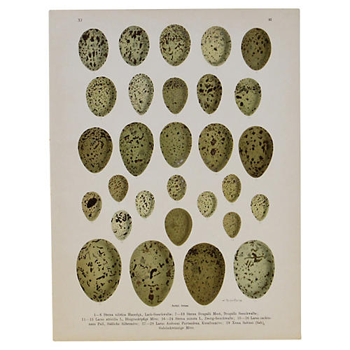 Green Speckled Eggs, C. 1890