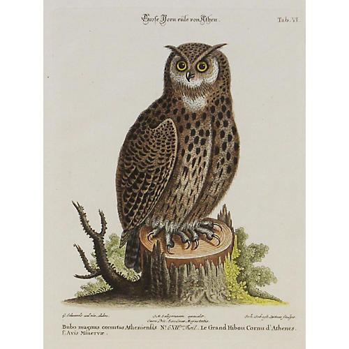 Athena Owl, C. 1750