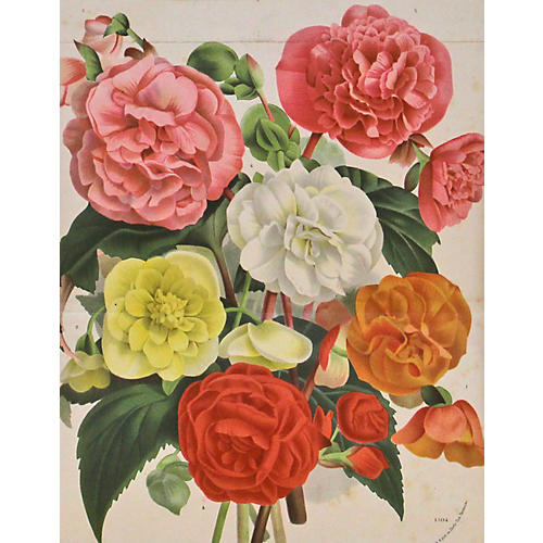 Begonia Bouquet, C. 1860
