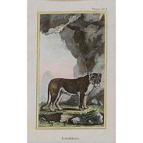 Lioness, C. 1790