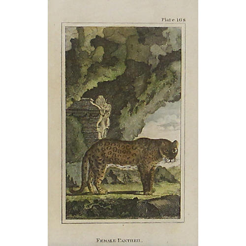 Female Panther, C. 1790