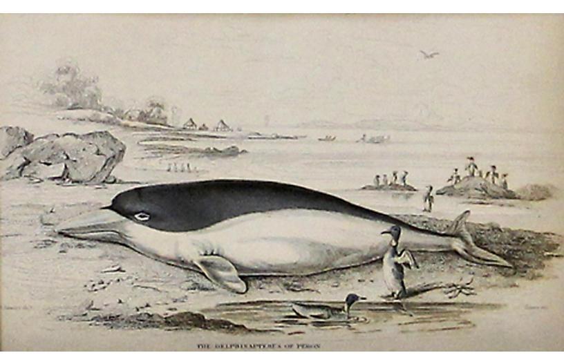 White Whale, 1843