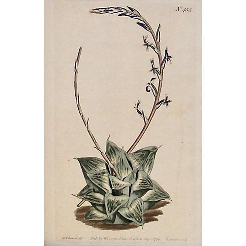 Cushion Aloe, 1799