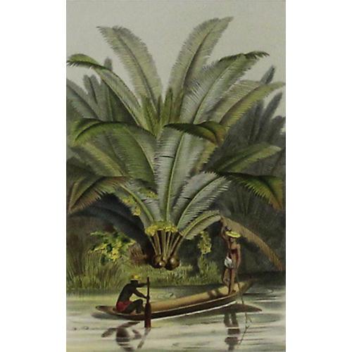 Ivory Palms w/ Canoe, C. 1860
