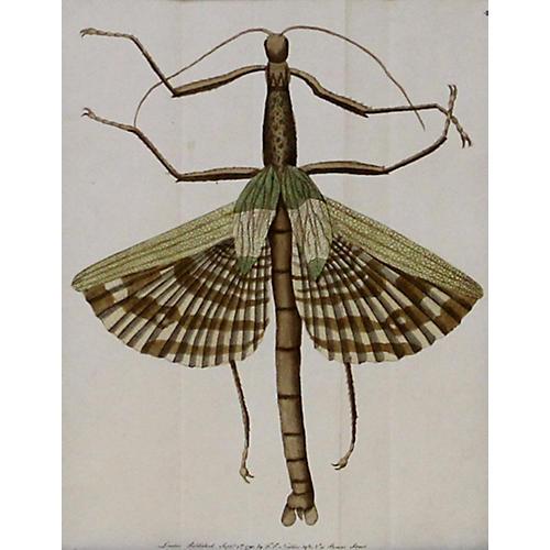 Mantis, C. 1790