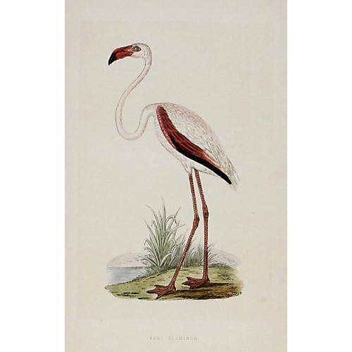 Rosy Flamingo, 1863