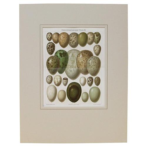 Eggs on Display, C. 1890