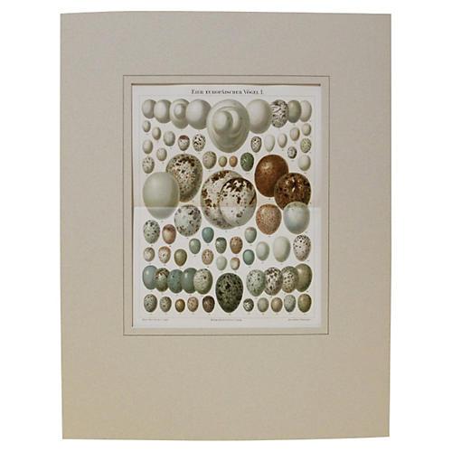 Array of Eggs, C. 1890