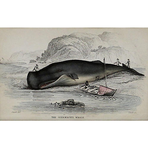Beached Spermaceti Whale, 1843