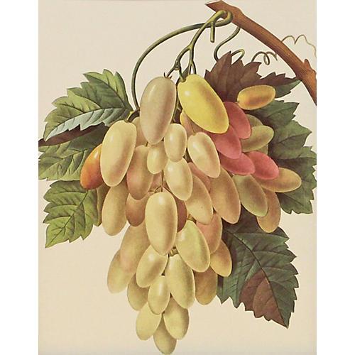 Grapes w/ Leaves & Stem