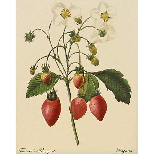 Bouquet of Strawberries