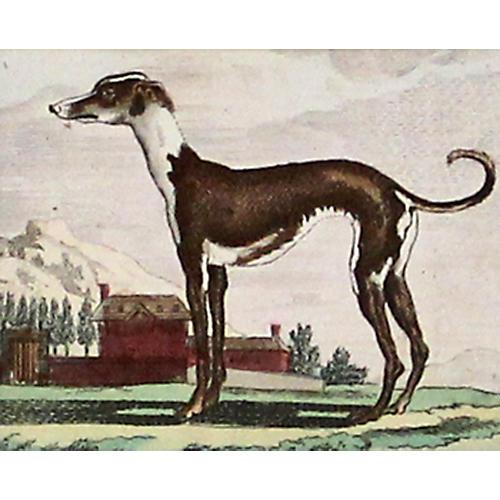Greyhound, C. 1800
