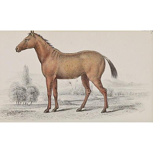 Hybrid Foal, 1843