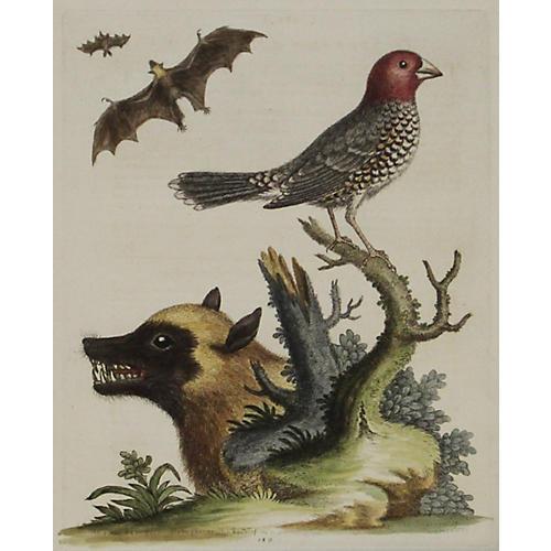 Bat, Badger & Sparrow, C. 1750