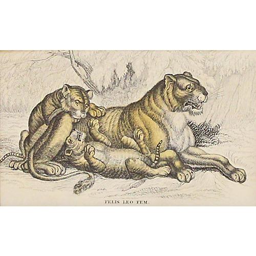 Lioness w/ Cubs, C. 1840