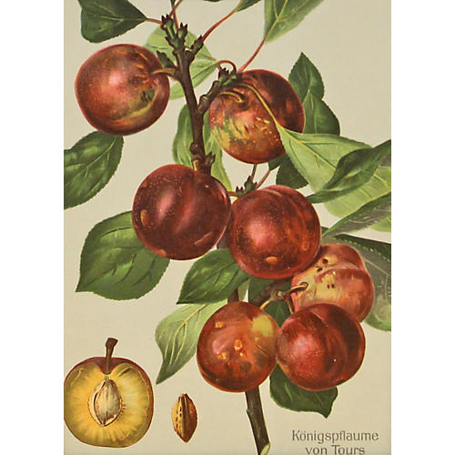 Vibrant Red Plums, C. 1890