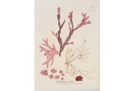 Pink & Lavender Seaweed, C. 1810