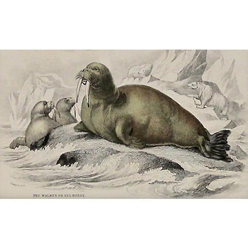 Walrus w/ Pups, C. 1840