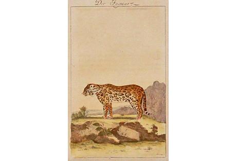 Jaguar, 1780