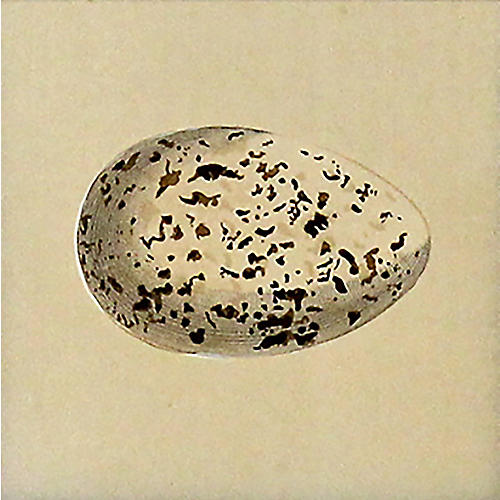 White Egg w/ Speckles, 1872