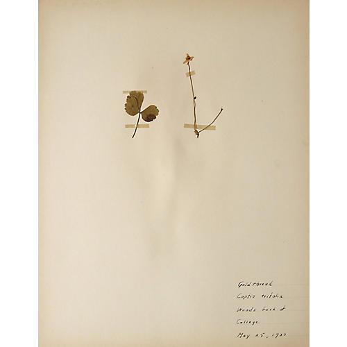 Gold Thread Plant, 1933