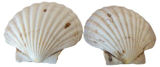 Scallop Shells, Pair