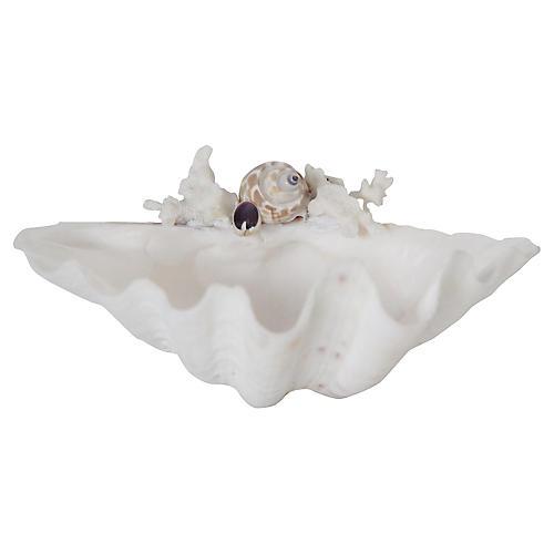 Clamshell w/ Seashells