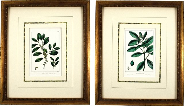 Antique  Botanical   Engravings, Pair