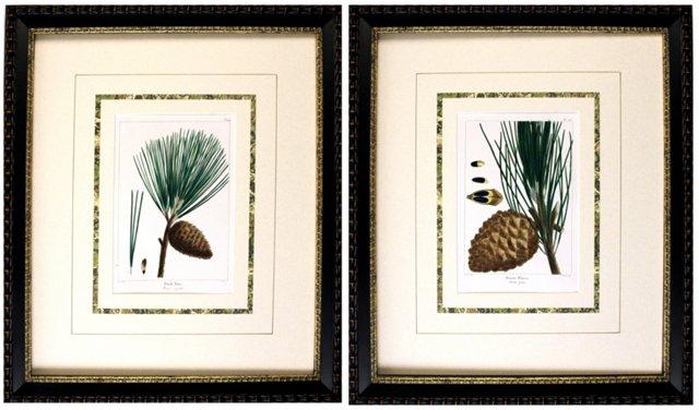 Pine Botanicals, 1865, Pair
