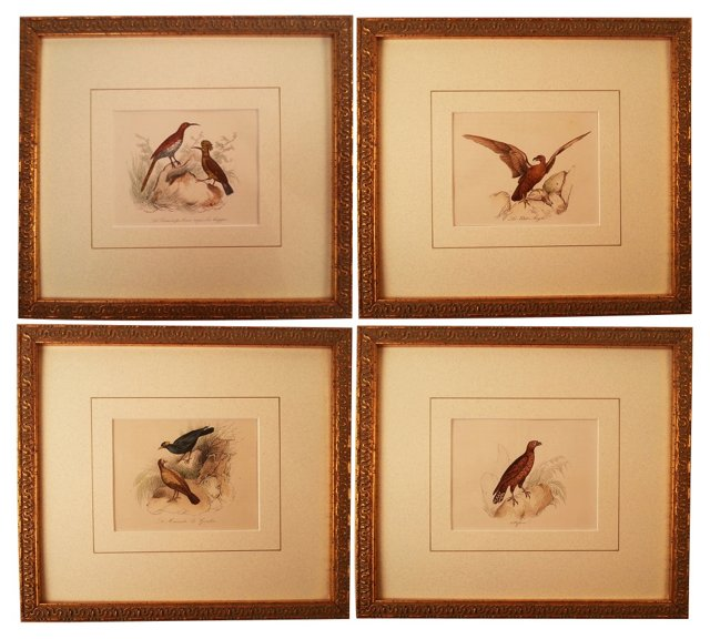 Antique Bird Engravings,    Set of 4